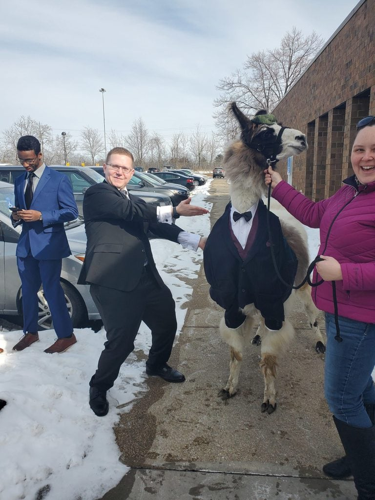 Llama in suit at wedding