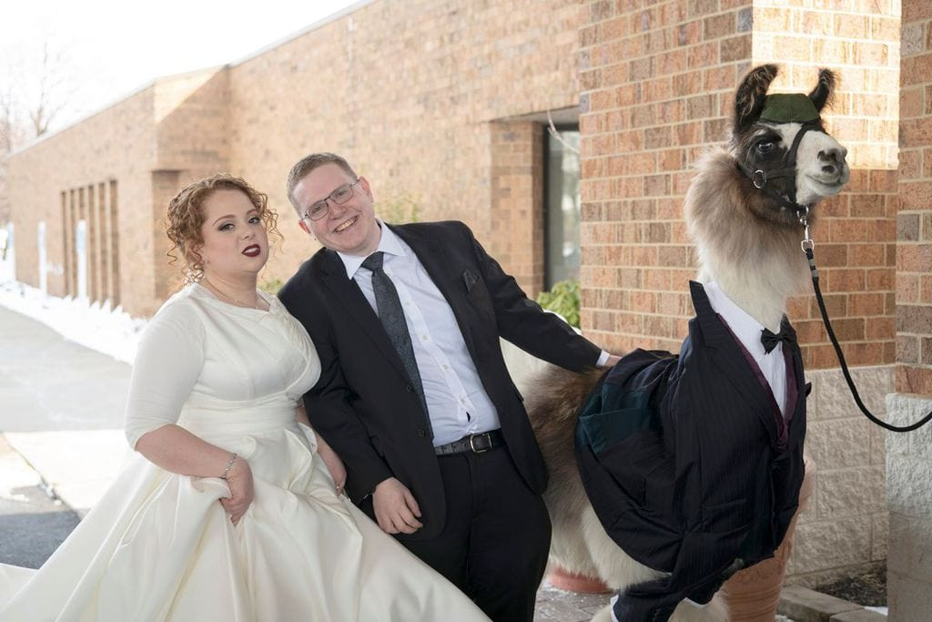 llama at wedding - promise kept