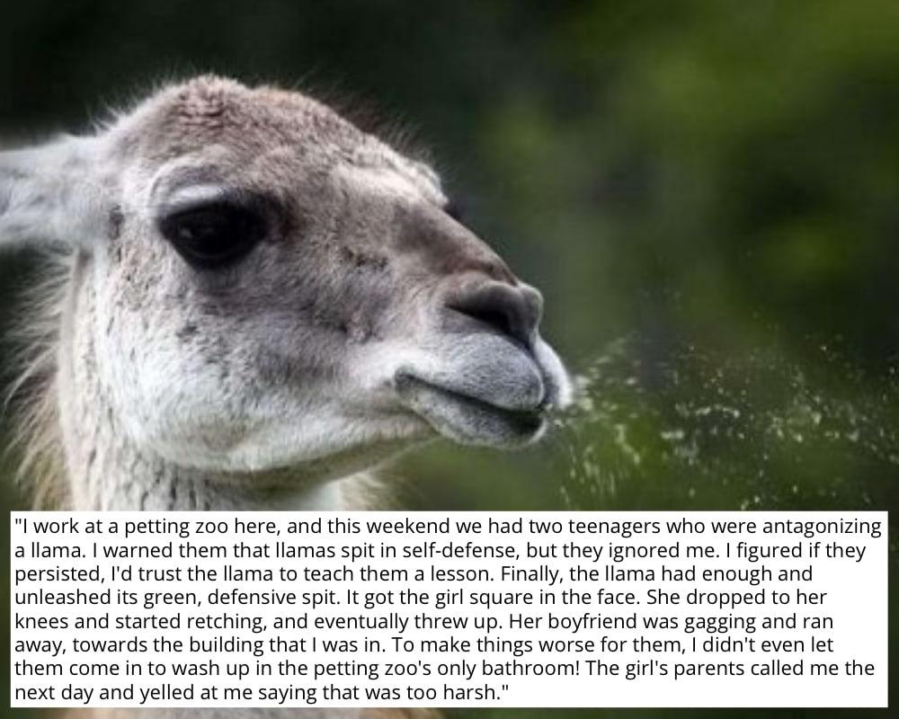 Petting Zoo Payback